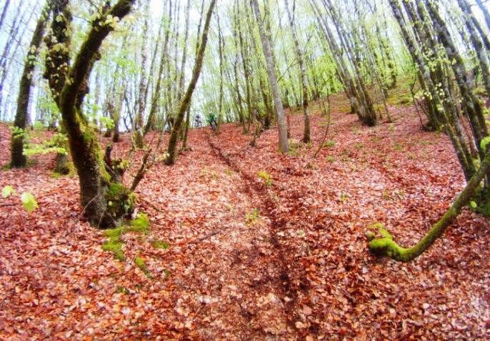 Descente en sous bois